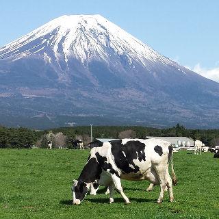 牛から生まれるエネルギーの新たな可能性
