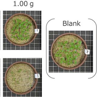 土壌を汚染しない「土に還る電池」が未来のスタンダードになる?
