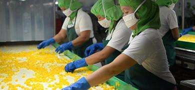 果物でおなじみのDoleがフィリピンで「パイナップル発電」に挑戦!環境負荷低減を狙う新バイオガス発電計画とは