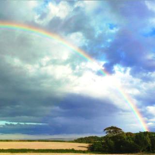 「虹は7色」という常識を広めたのは、あの有名な科学者だった!?