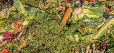 「食品廃棄量600万t」はビジネス的に最適解?「食品ロス」の裏にある日本が抱える本当の課題