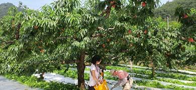 """東日本大震災から9年──日本、そして世界で親しまれる""""福島の桃""""の現在地"""
