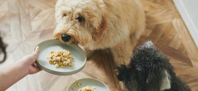 AIoTで獣医療改革も!ペットテックベンチャー・シロップが目指す「ペットライフコンシェルジュ」とは?
