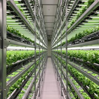 強くて映える野菜は⼯場産︕ 世界最⼤の完全⼈⼯光型植物⼯場が担う日本農業の未来